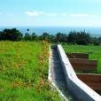 Les toitures végétalisées à la Réunion